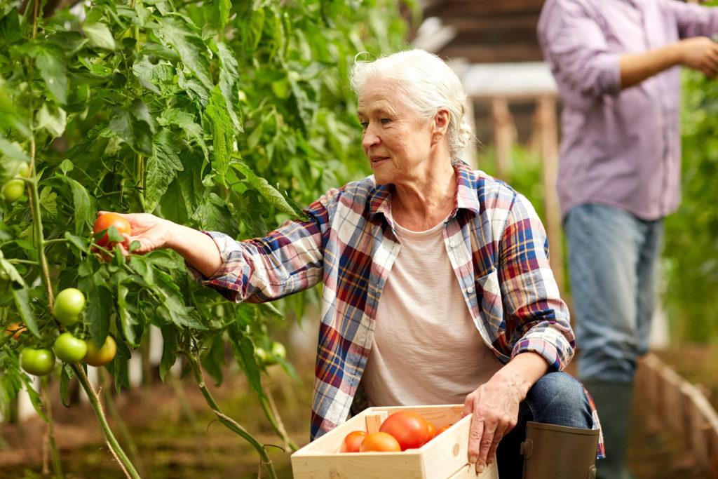 Immigrate to Saskatchewan through farming enterprises